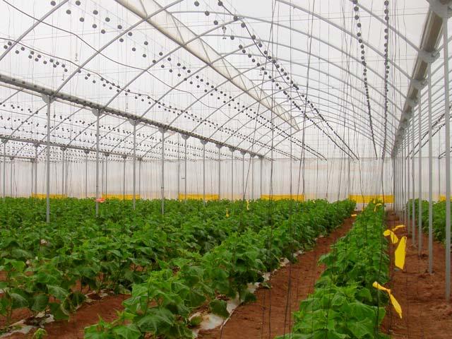 Invernadero tropical - Fabricar un invernadero ...