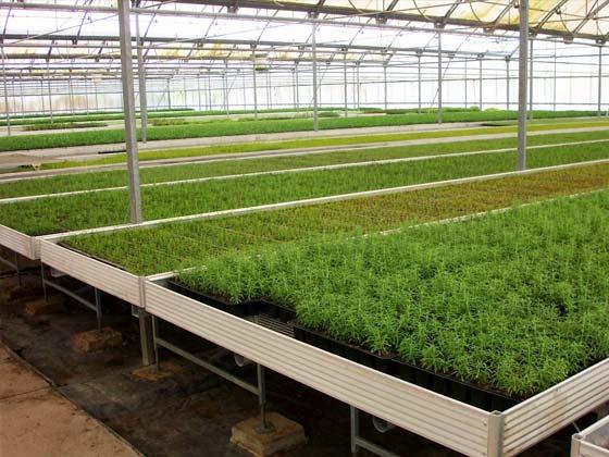 Mesas de cultivo - Mesa de cultivo leroy ...